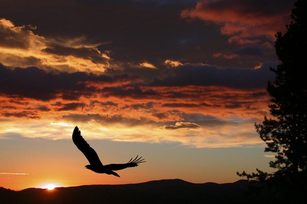 eagle-at-sunset-shane-bechler