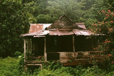 jungle shack