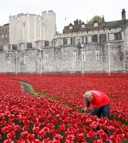 London Poppy 1