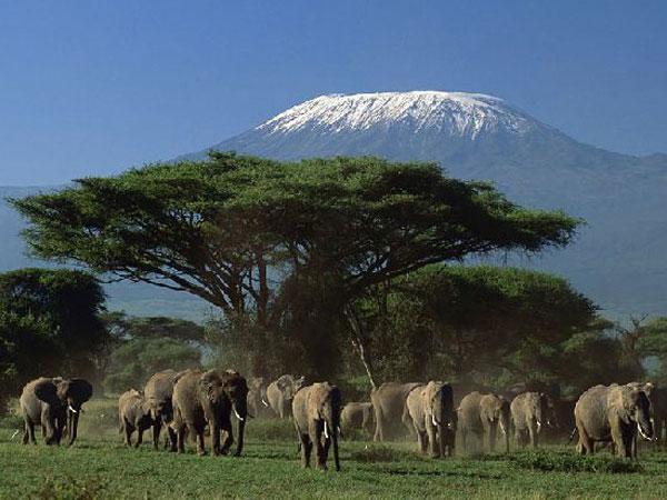 tanaznia-elephant