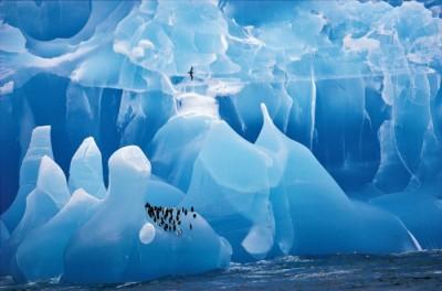 wildlife ice photo